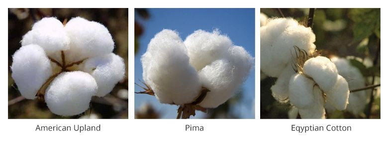 Pima Cotton Vs Egyptian Cotton, Which Is Softest