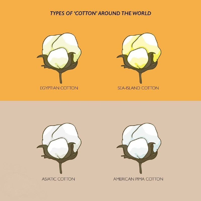 Where Does Cotton Come From Types Of Cotton